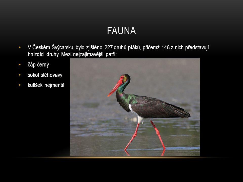 Fauna V Českém Švýcarsku bylo zjištěno 227 druhů ptáků, přičemž 148 z nich představují hnízdící druhy. Mezi nejzajímavější patří: