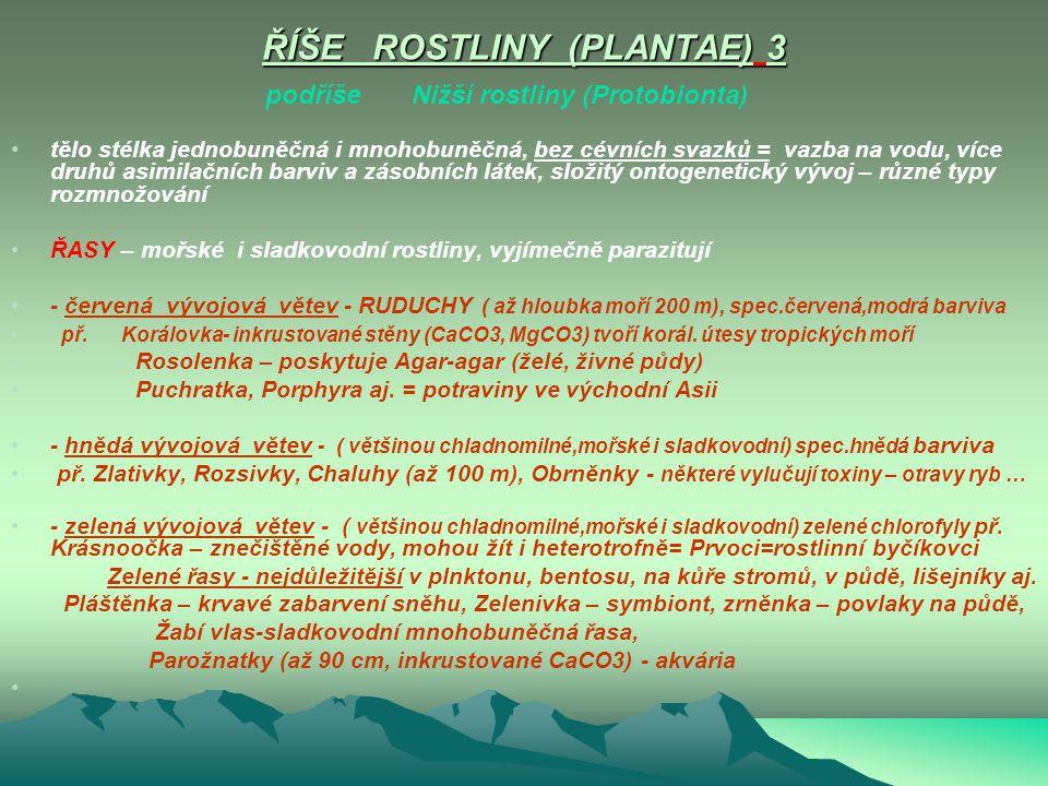ŘÍŠE ROSTLINY (PLANTAE) 3