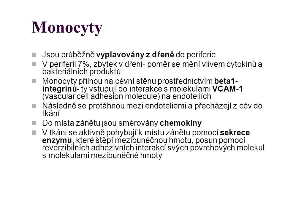 Monocyty Jsou průběžně vyplavovány z dřeně do periferie