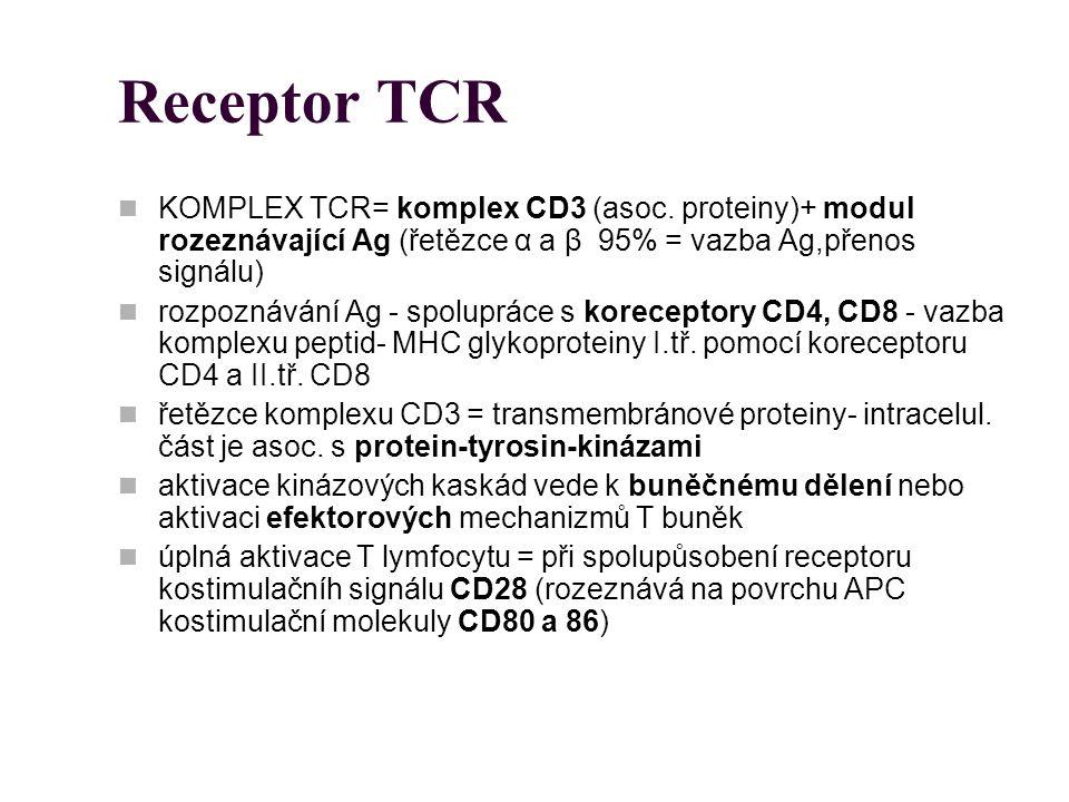 Receptor TCR KOMPLEX TCR= komplex CD3 (asoc. proteiny)+ modul rozeznávající Ag (řetězce α a β 95% = vazba Ag,přenos signálu)