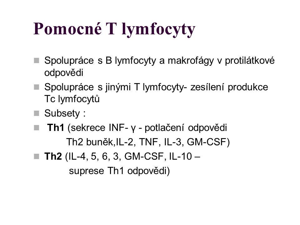 Pomocné T lymfocyty Spolupráce s B lymfocyty a makrofágy v protilátkové odpovědi. Spolupráce s jinými T lymfocyty- zesílení produkce Tc lymfocytů.