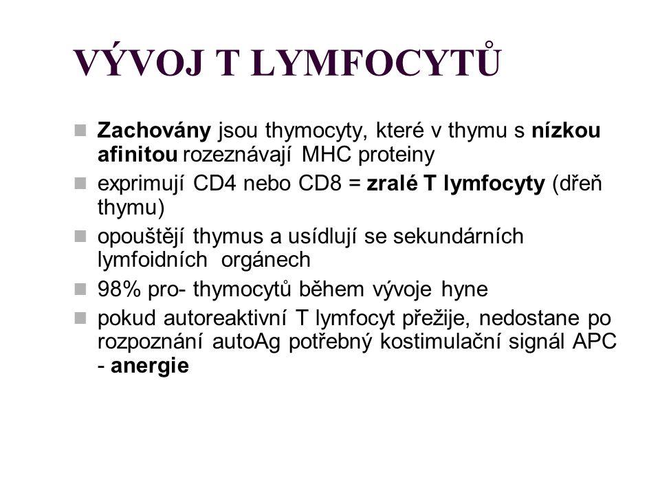 VÝVOJ T LYMFOCYTŮ Zachovány jsou thymocyty, které v thymu s nízkou afinitou rozeznávají MHC proteiny.