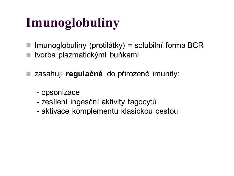 Imunoglobuliny Imunoglobuliny (protilátky) = solubilní forma BCR