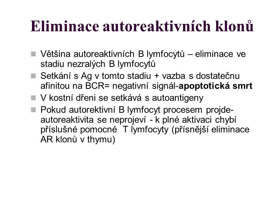Eliminace autoreaktivních klonů