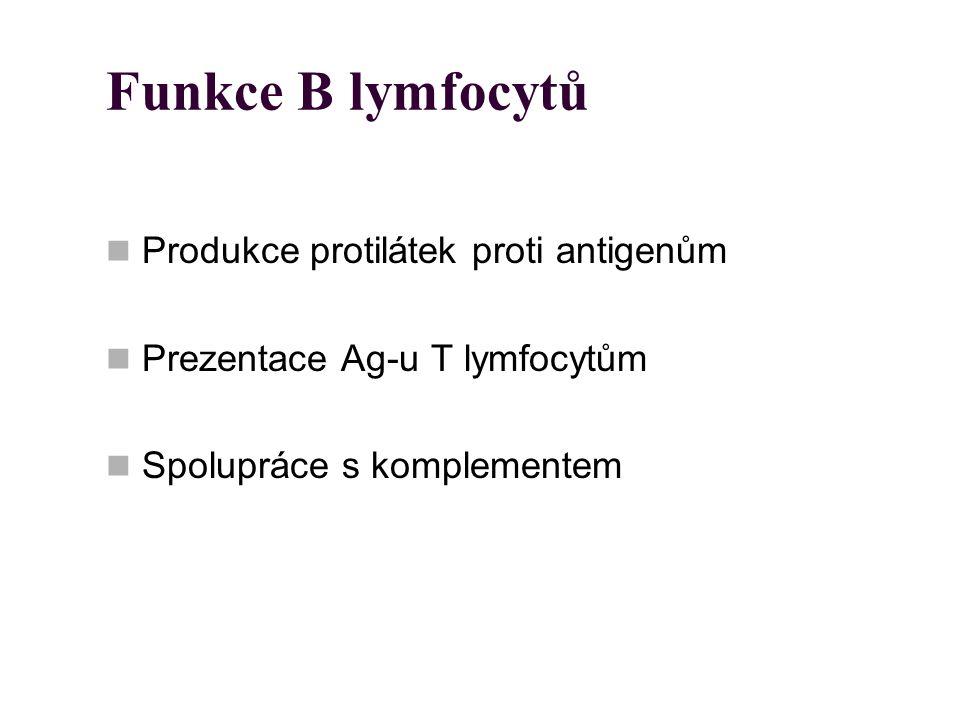 Funkce B lymfocytů Produkce protilátek proti antigenům