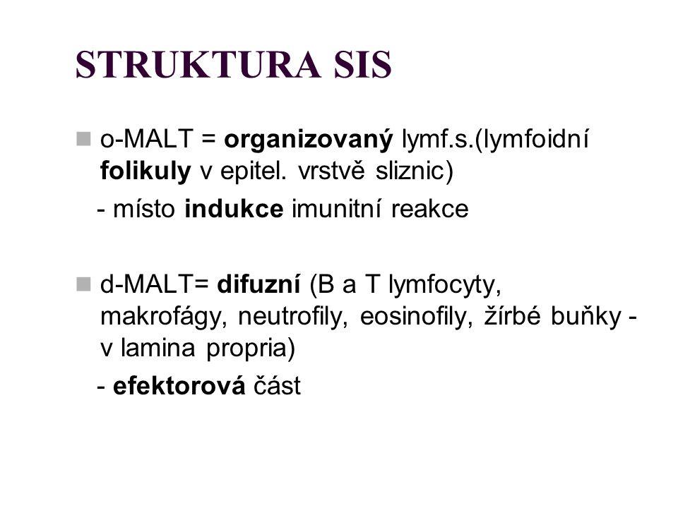 STRUKTURA SIS o-MALT = organizovaný lymf.s.(lymfoidní folikuly v epitel. vrstvě sliznic) - místo indukce imunitní reakce.