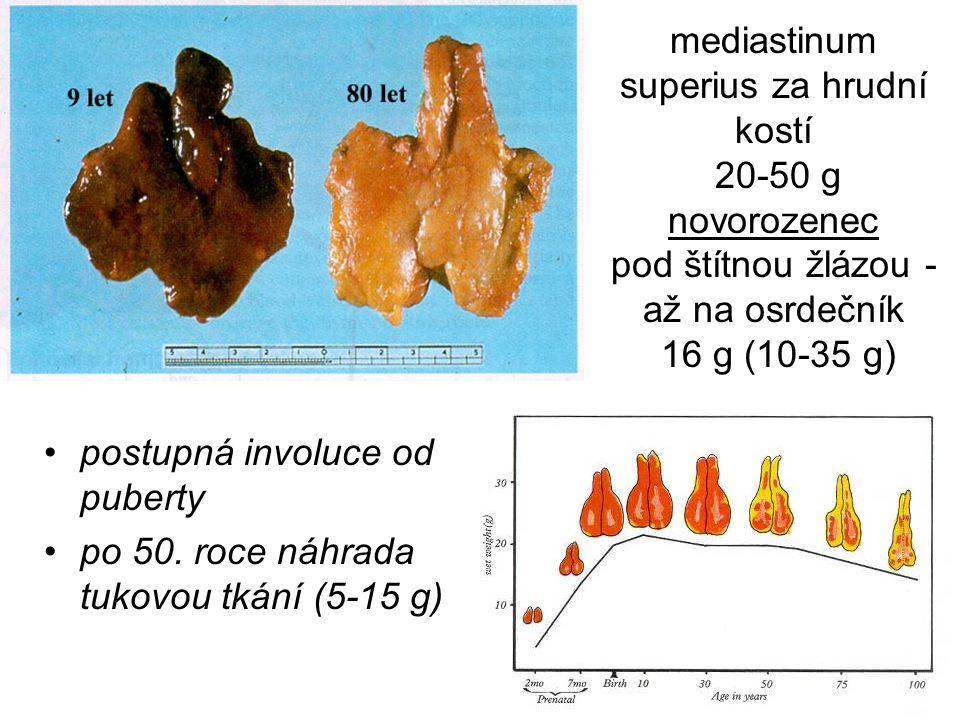 mediastinum superius za hrudní kostí 20-50 g novorozenec pod štítnou žlázou - až na osrdečník 16 g (10-35 g)