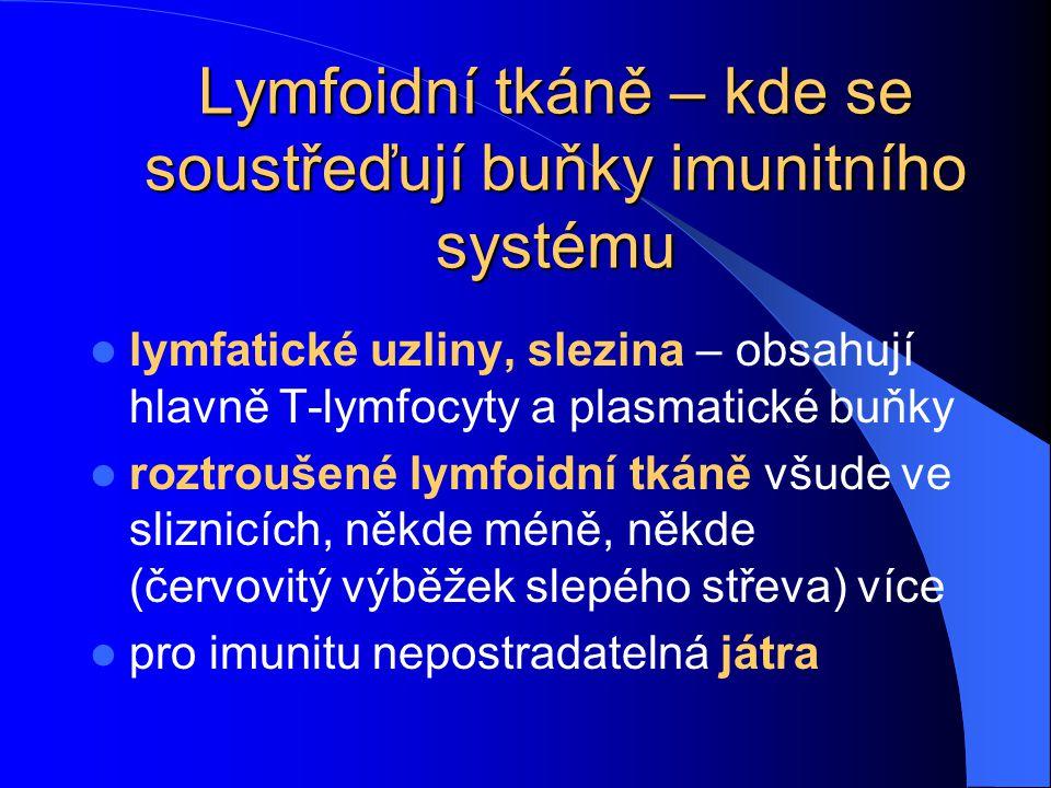 Lymfoidní tkáně – kde se soustřeďují buňky imunitního systému