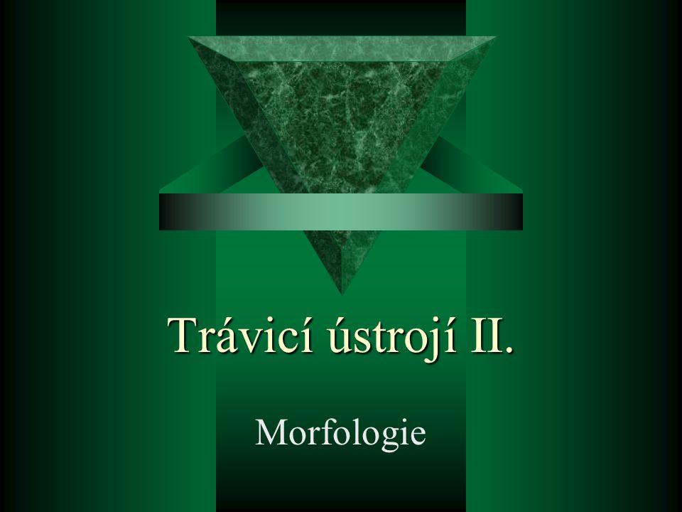 Trávicí ústrojí II. Morfologie