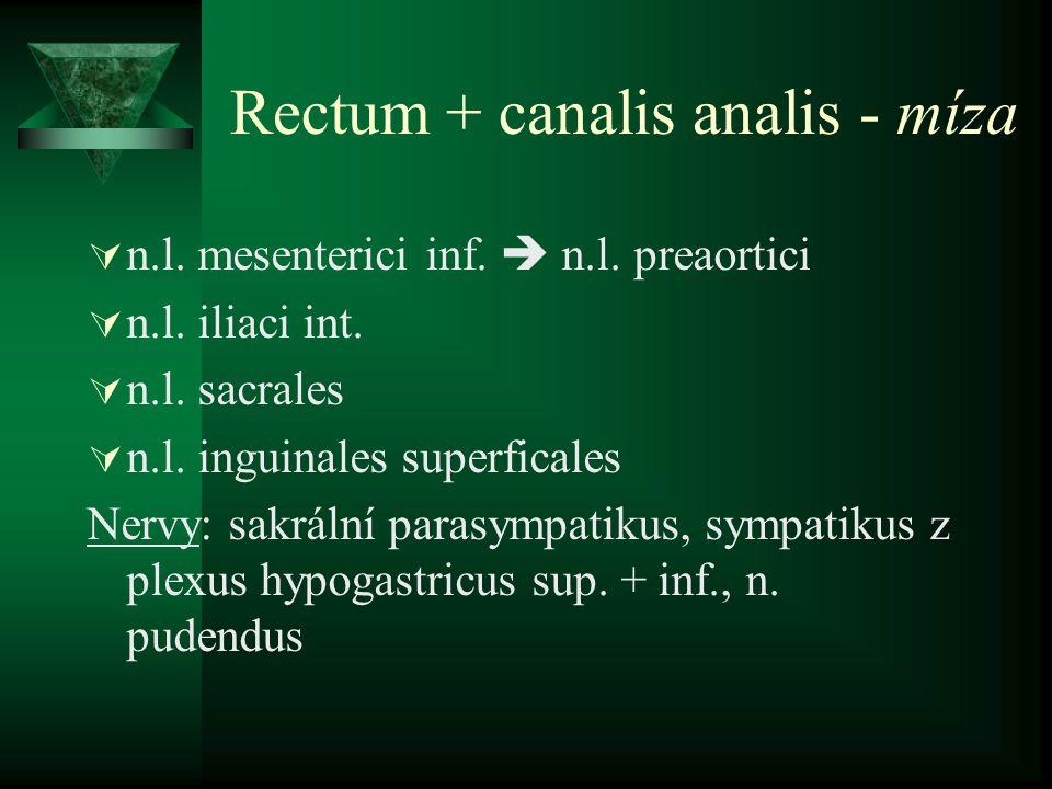 Rectum + canalis analis - míza