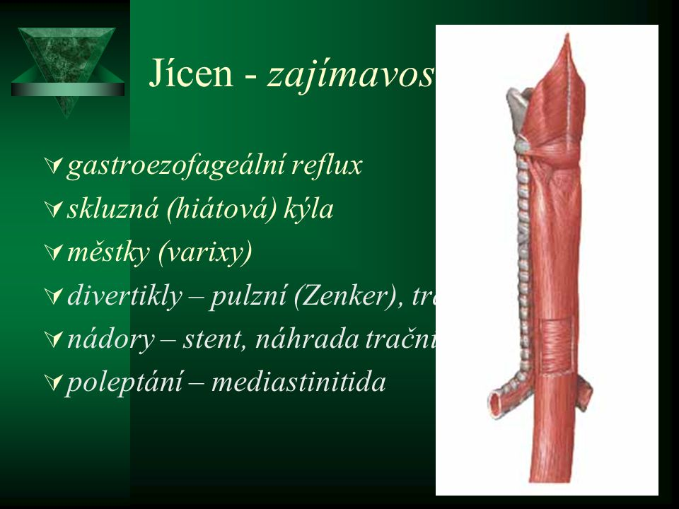 Jícen - zajímavosti gastroezofageální reflux skluzná (hiátová) kýla