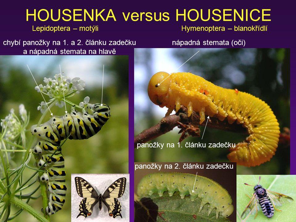 HOUSENKA versus HOUSENICE