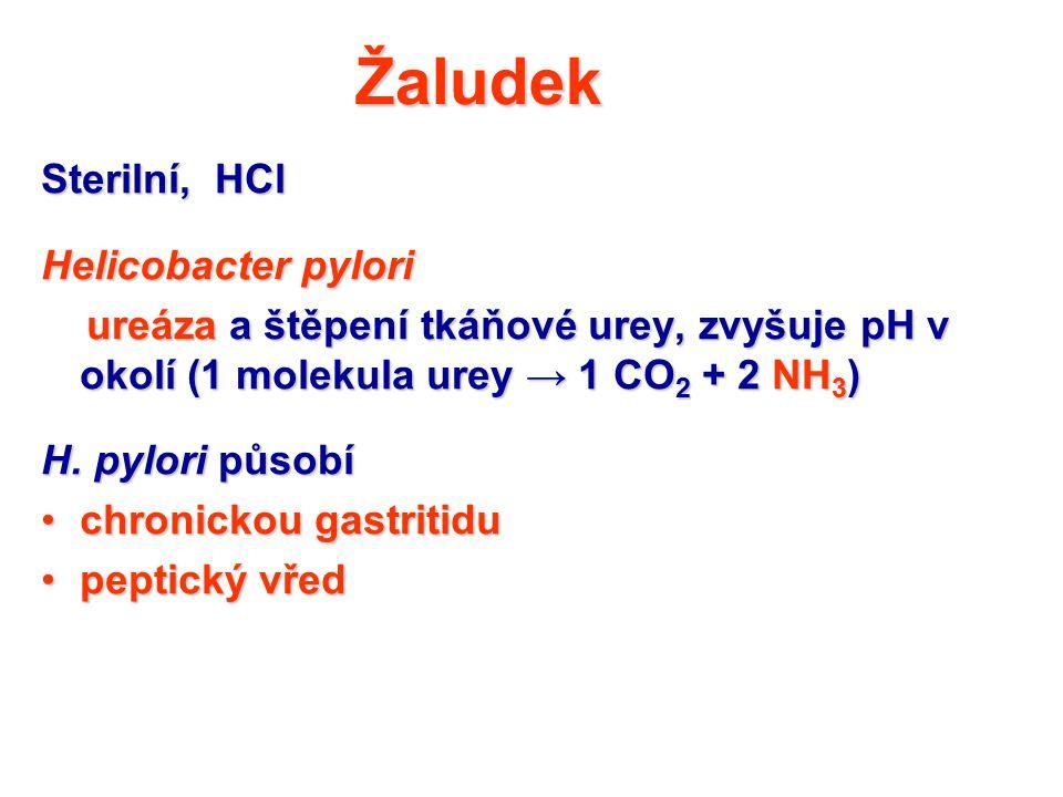 Žaludek Sterilní, HCl Helicobacter pylori