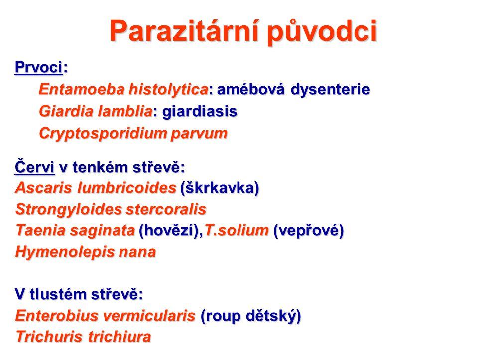 Parazitární původci Prvoci: Entamoeba histolytica: amébová dysenterie