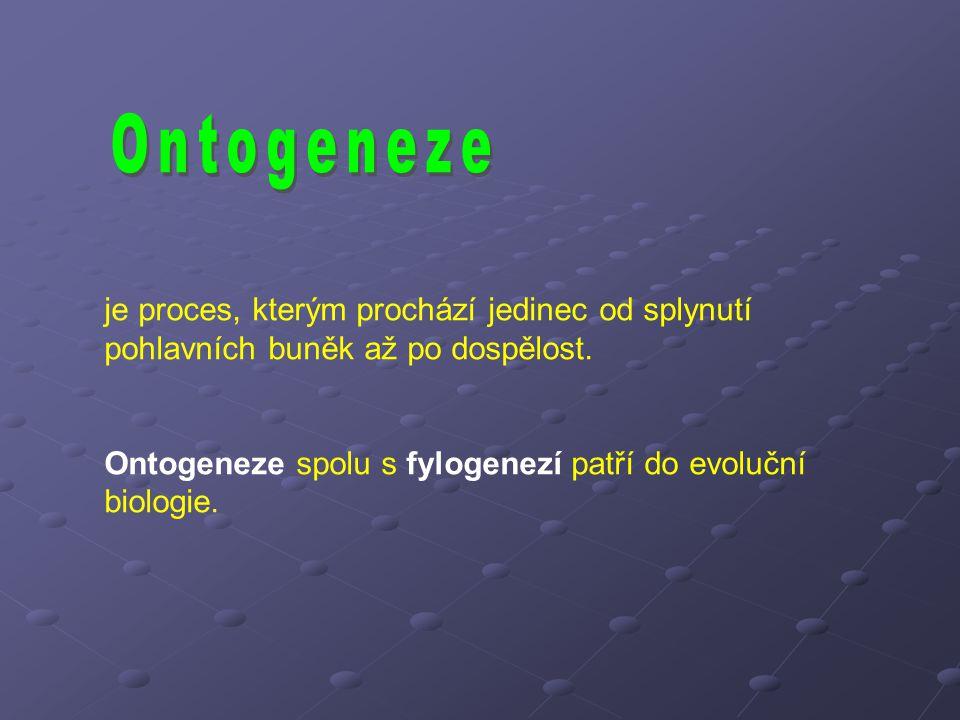 Ontogeneze je proces, kterým prochází jedinec od splynutí pohlavních buněk až po dospělost.