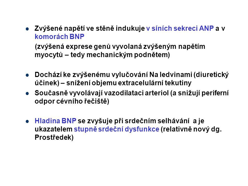 Zvýšené napětí ve stěně indukuje v síních sekreci ANP a v komorách BNP