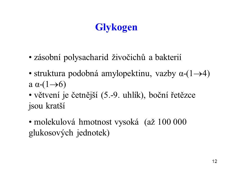 Glykogen zásobní polysacharid živočichů a bakterií
