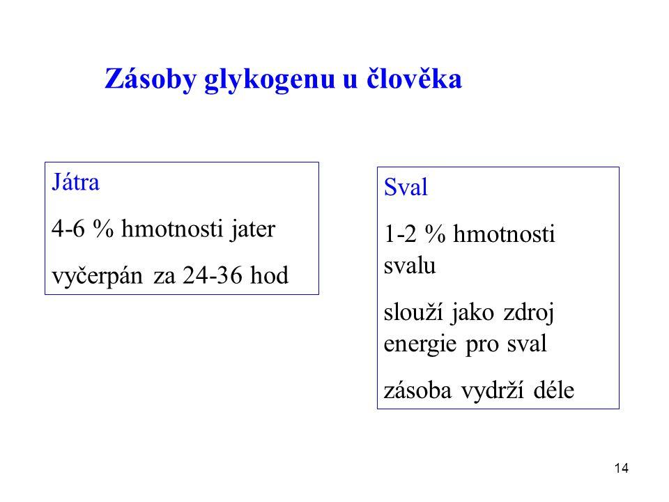 Zásoby glykogenu u člověka