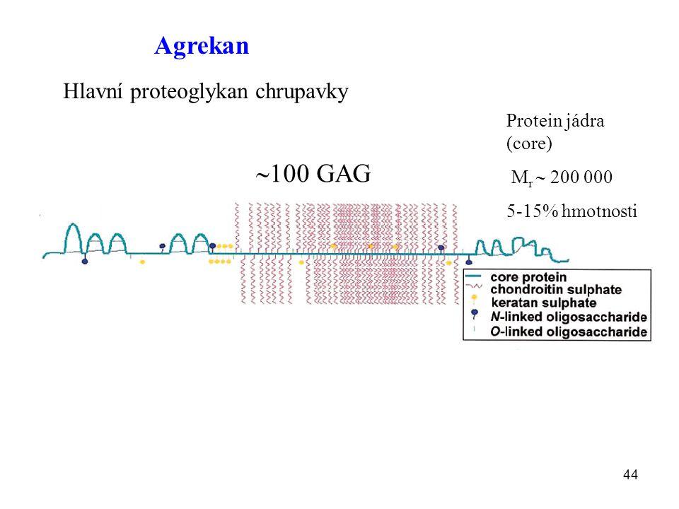 Agrekan 100 GAG Hlavní proteoglykan chrupavky Protein jádra (core)