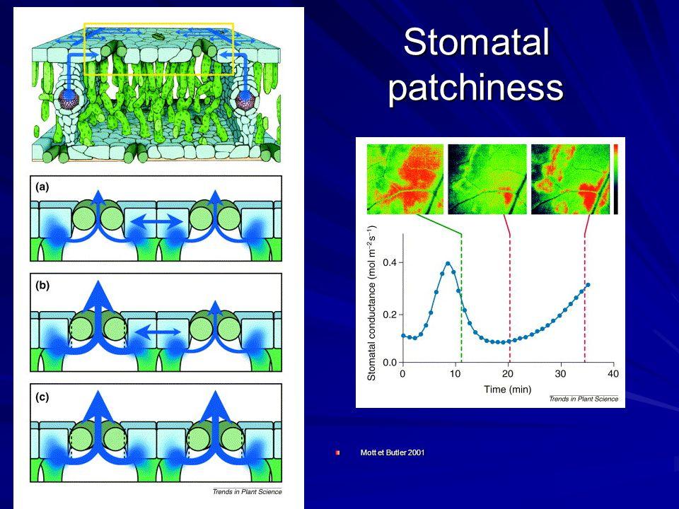 Stomatal patchiness Mott et Butler 2001
