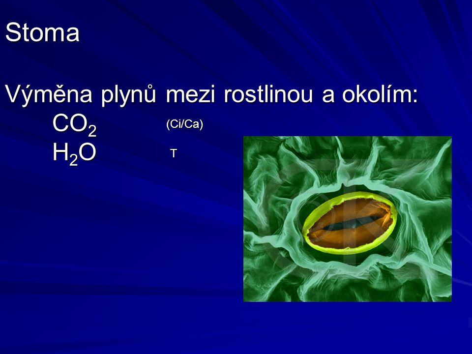 Stoma Výměna plynů mezi rostlinou a okolím: CO2 H2O