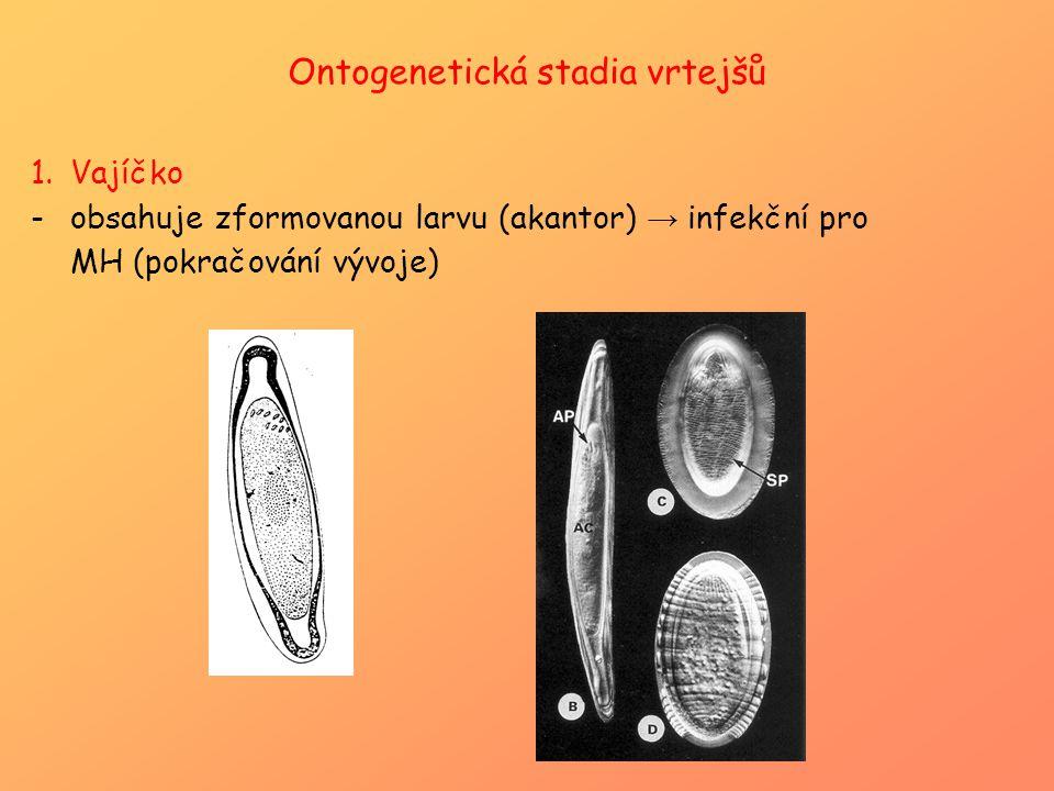 Ontogenetická stadia vrtejšů