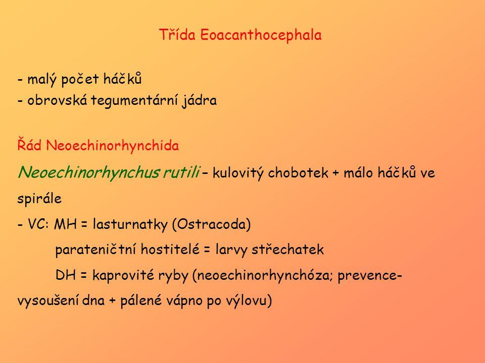 Třída Eoacanthocephala
