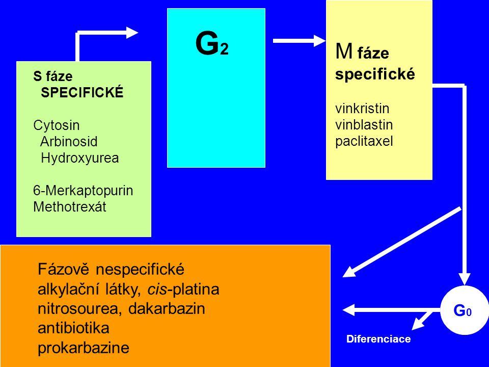 M G2 S G1 G0 M fáze Synthesis R specifické MITOSIS Fázově nespecifické