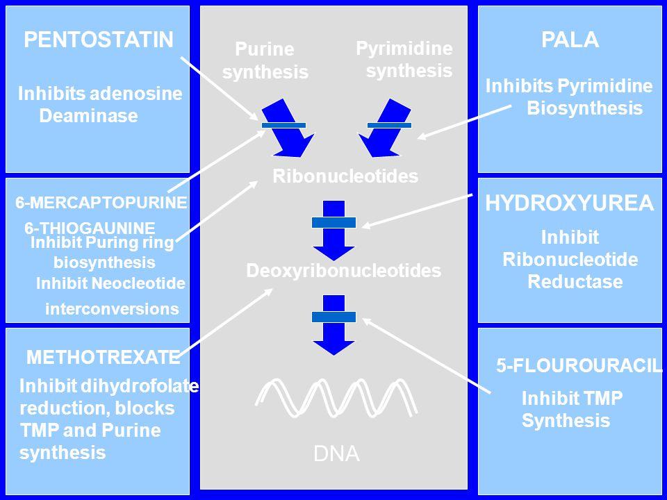 PENTOSTATIN PALA Purine HYDROXYUREA DNA Pyrimidine synthesis synthesis