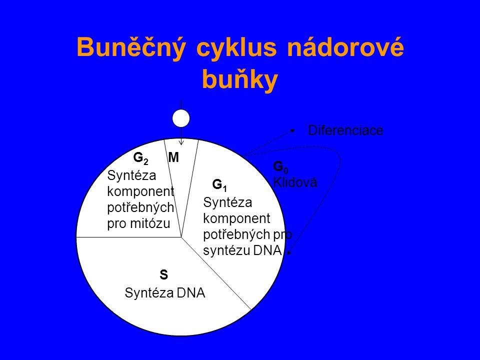 Buněčný cyklus nádorové buňky