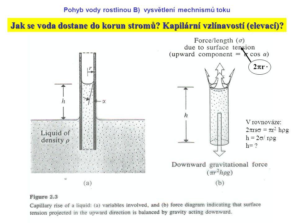 Jak se voda dostane do korun stromů Kapilární vzlínavostí (elevací)