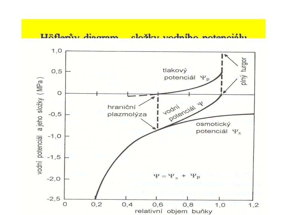 Höflerův diagram – složky vodního potenciálu