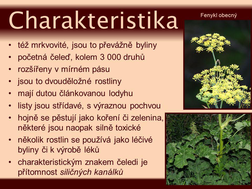 Charakteristika též mrkvovité, jsou to převážně byliny