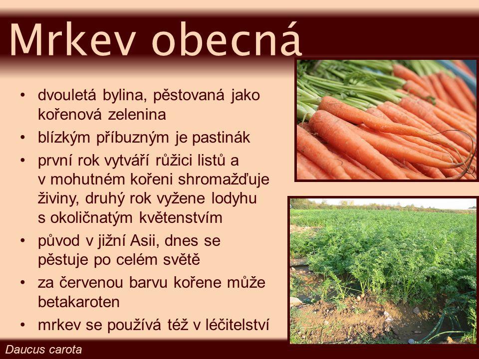 Mrkev obecná dvouletá bylina, pěstovaná jako kořenová zelenina