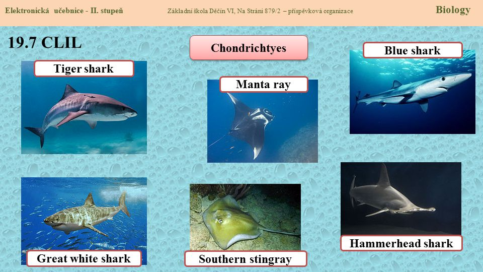 19.7 CLIL Chondrichtyes Blue shark Tiger shark Manta ray