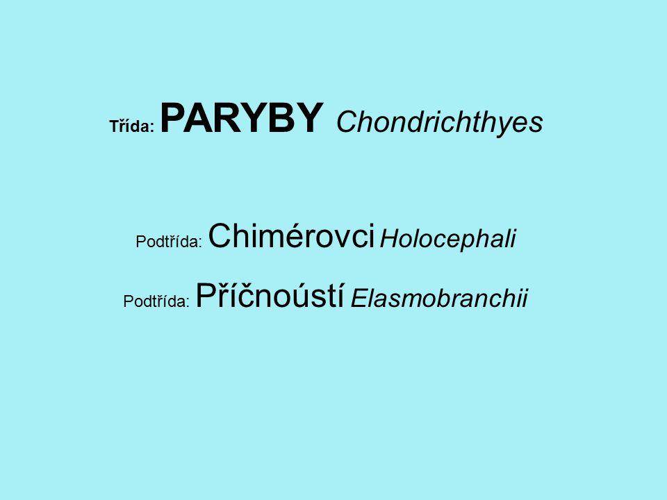 Třída: PARYBY Chondrichthyes