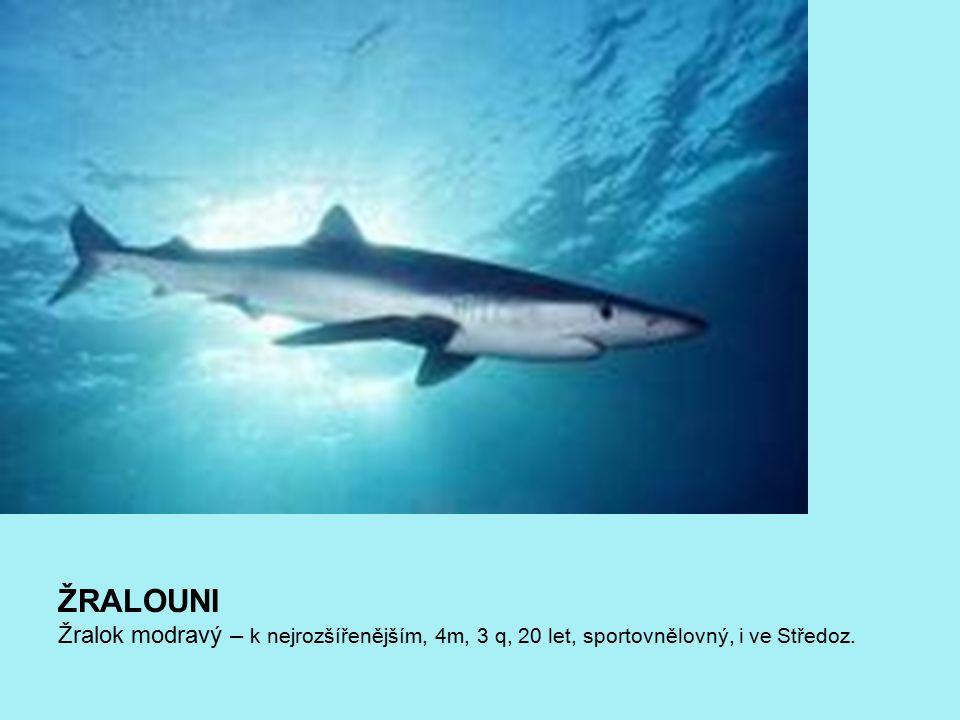 ŽRALOUNI Žralok modravý – k nejrozšířenějším, 4m, 3 q, 20 let, sportovnělovný, i ve Středoz.