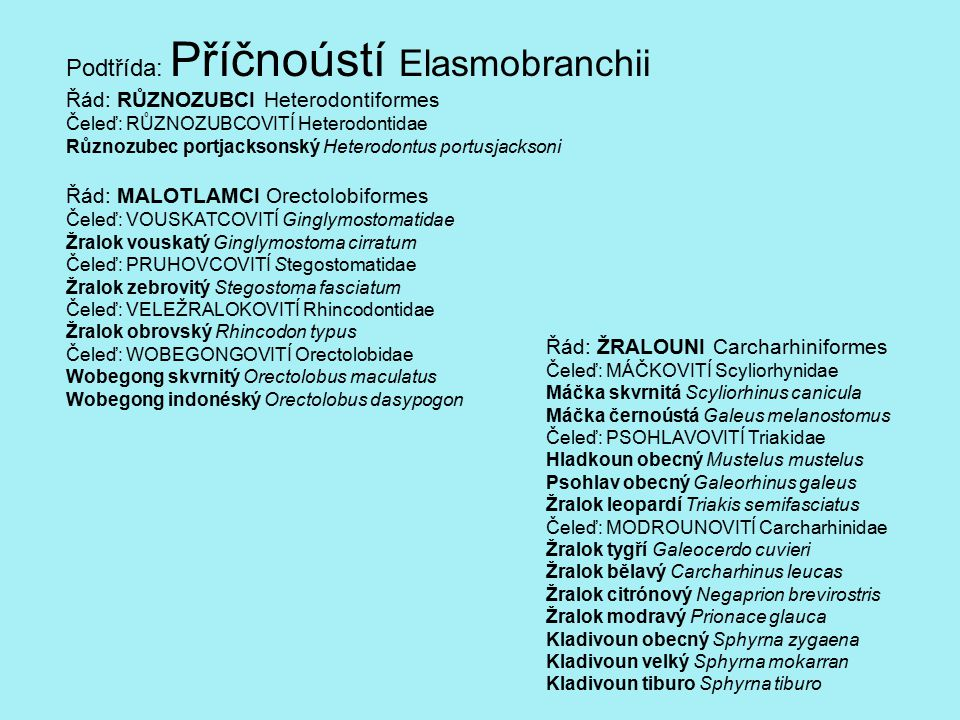 Podtřída: Příčnoústí Elasmobranchii