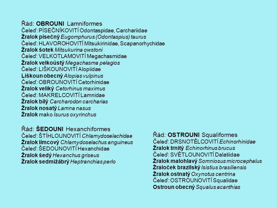 Řád: OBROUNI Lamniformes