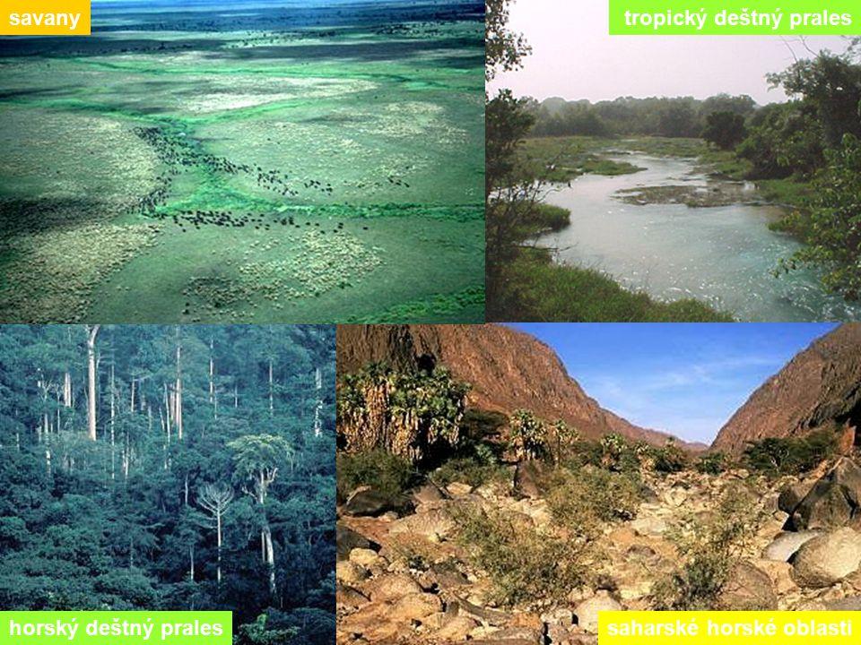 savany tropický deštný prales horský deštný prales saharské horské oblasti