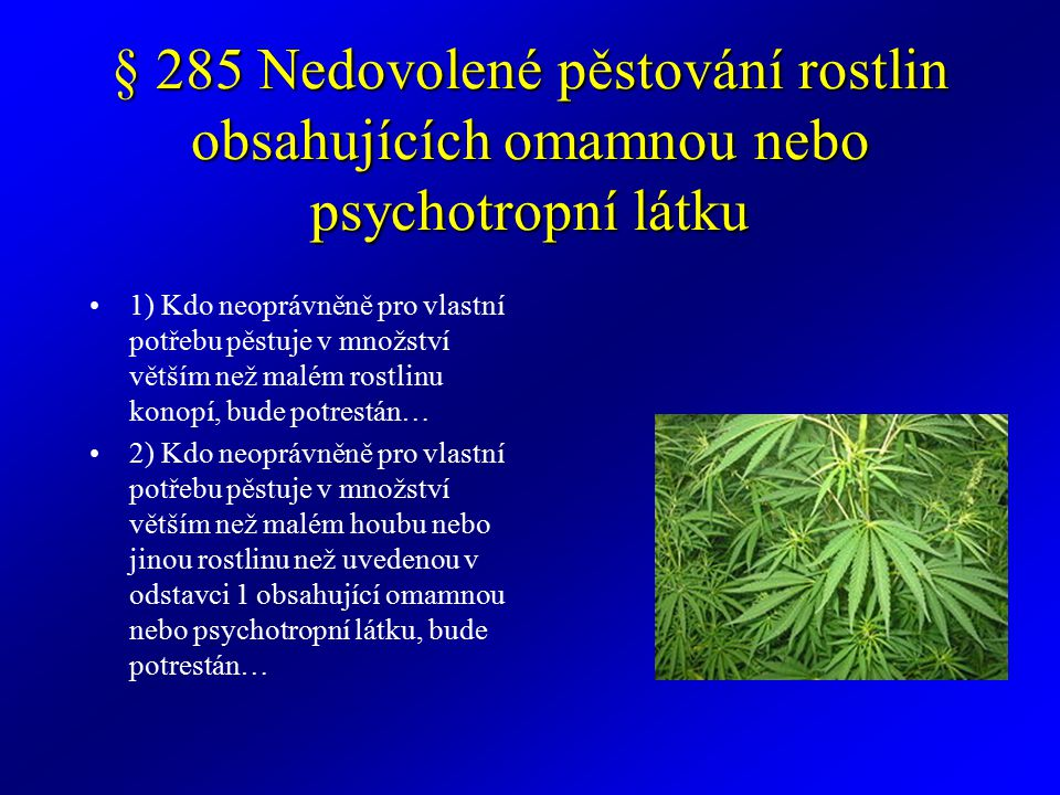 § 285 Nedovolené pěstování rostlin obsahujících omamnou nebo psychotropní látku