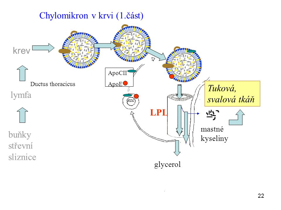 Chylomikron v krvi (1.část)