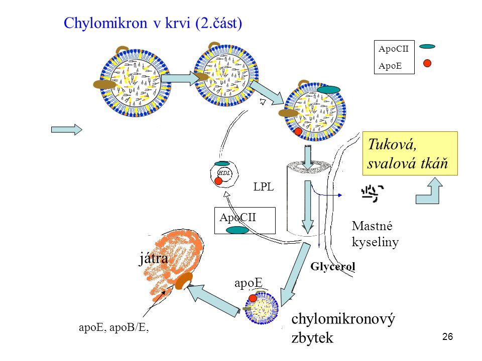 Chylomikron v krvi (2.část)