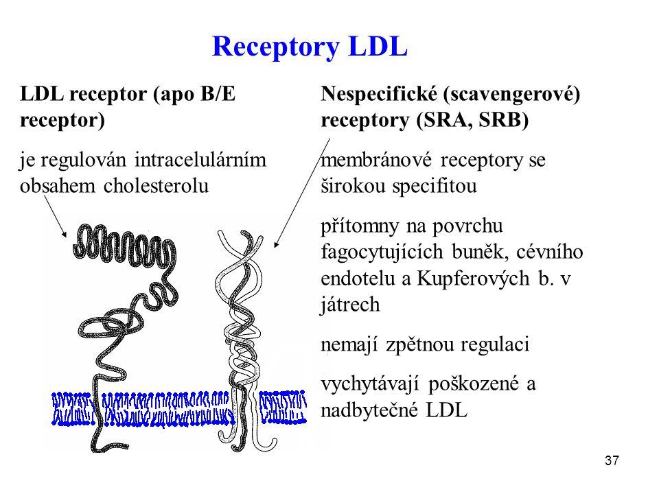 Receptory LDL LDL receptor (apo B/E receptor)