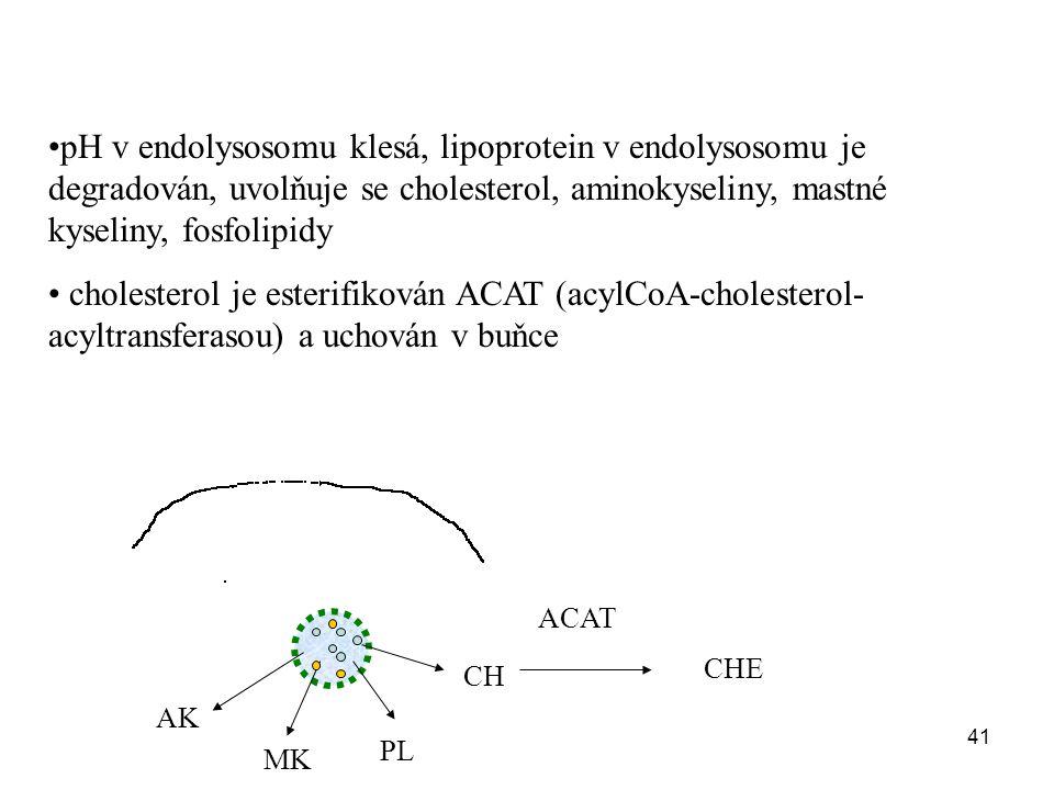 pH v endolysosomu klesá, lipoprotein v endolysosomu je degradován, uvolňuje se cholesterol, aminokyseliny, mastné kyseliny, fosfolipidy