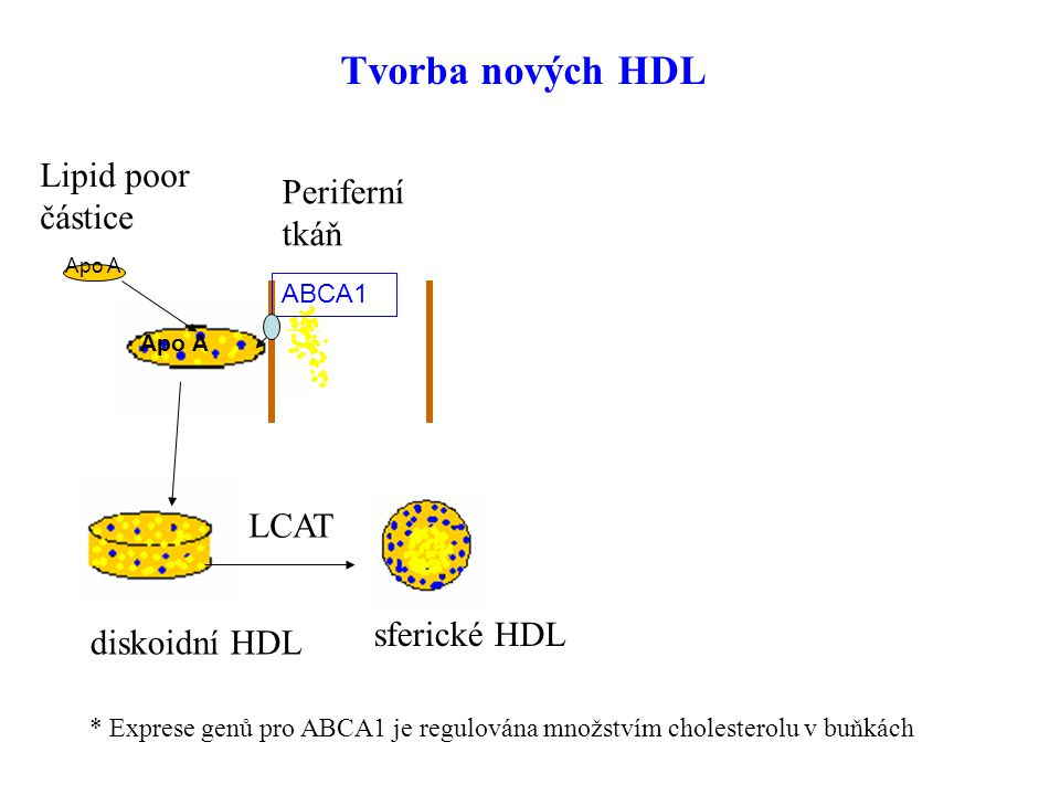 Tvorba nových HDL Lipid poor částice Periferní tkáň játra SR-B1