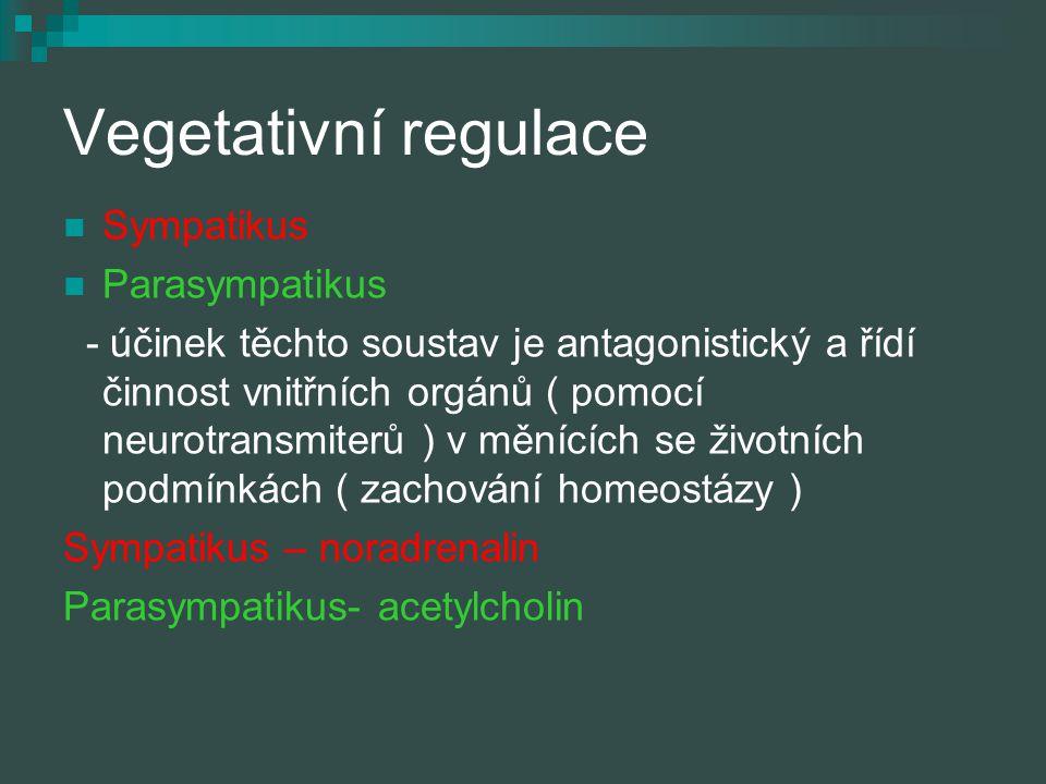 Vegetativní regulace Sympatikus Parasympatikus