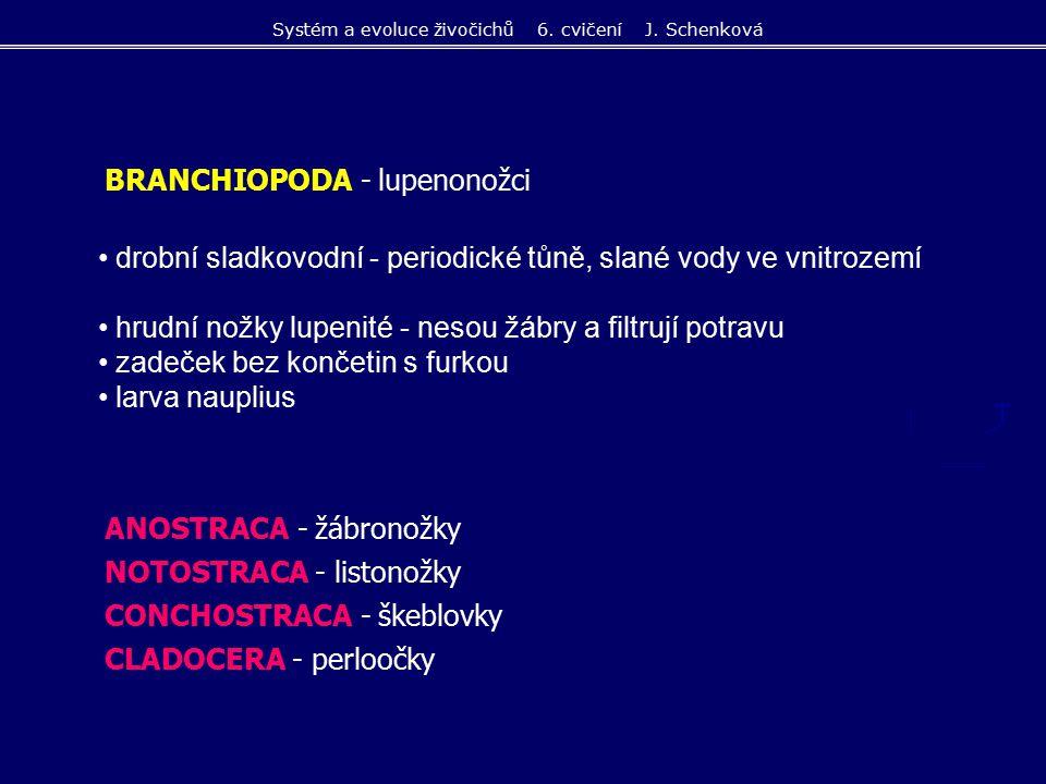 Systém a evoluce živočichů 6. cvičení J. Schenková
