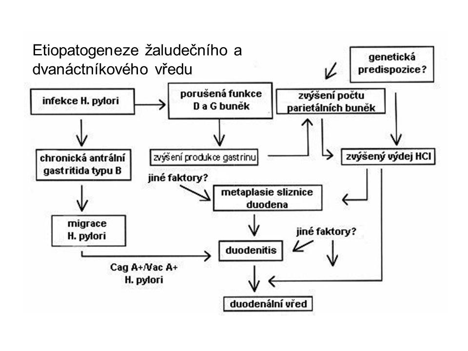 Etiopatogeneze žaludečního a