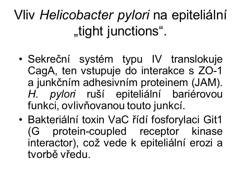 "Vliv Helicobacter pylori na epiteliální ""tight junctions ."